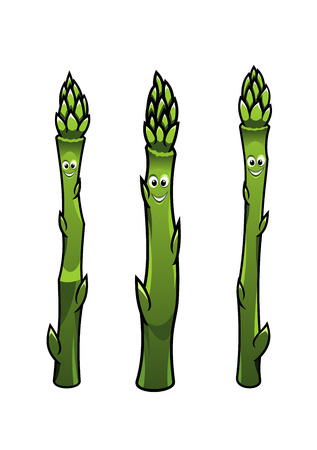 upright: Cartoon illustration of three different green happy smiling asparagus spears standing upright isolated on white Illustration