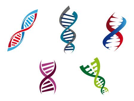 Cartoon illustratie van kleurrijke DNA-strengen met hun opgerolde spiraalvormige structuur van genetische nucleotiden, vijf verschillende varianten