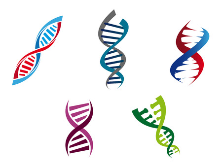 Cartoon illustration of colourful DNA strands with their coiled helical structure of genetic nucleotides , five different variants Ilustração
