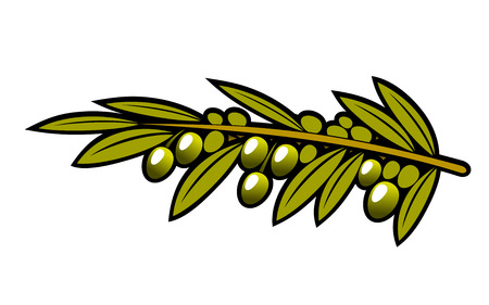 Cluster of ripening olives hanging on a leafy branch isolated on white, cartoon vector Vector