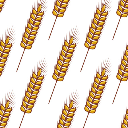 Seamless pattern of ripe ears of golden wheat orientated diagonally on a white background in square format Vector