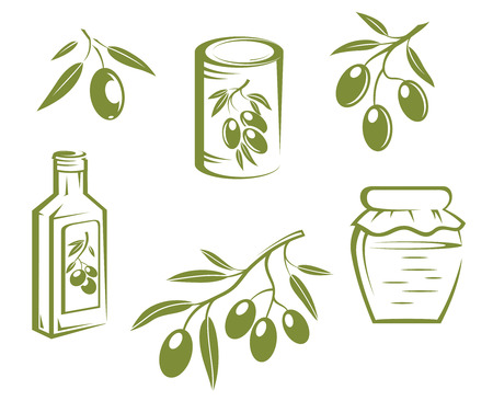 Doodle sketches of fresh healthy olives on twigs, bottled and preserved olives and olive oil Vector