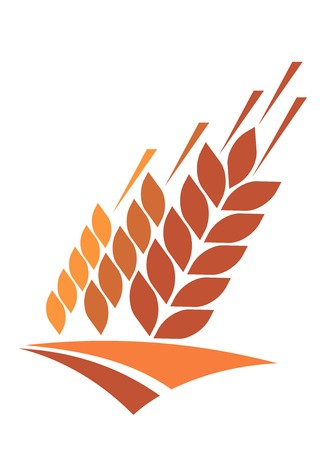 agricultura: Icono de la Agricultura con un campo de grano maduro de oro de trigo proporcionan un grano y piensos diet�ticos grapa, ilustraci�n vectorial aislados en blanco Vectores
