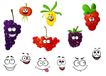 cranberry illustration: Cranberry, blackberry, rowan, cherry, grape and sea-buckthorn berries. Cartoon style