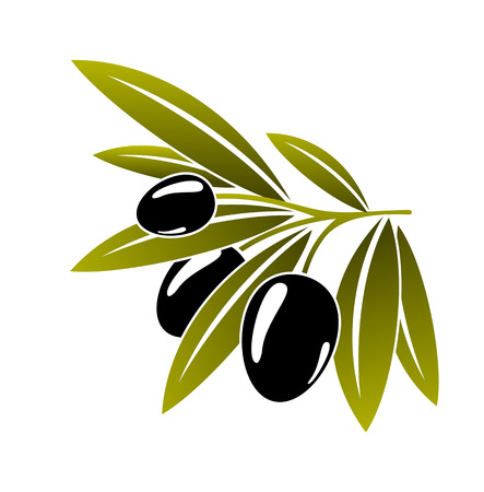 Leafy green twig with three healthy ripe black olives isolated on white in cartoon style Vetores