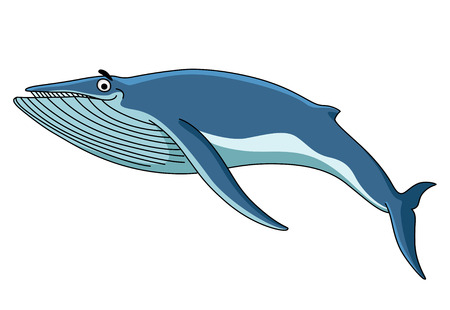 Big blue baleen whale swimming through the sea, cartoon illustration isolated on white Vector