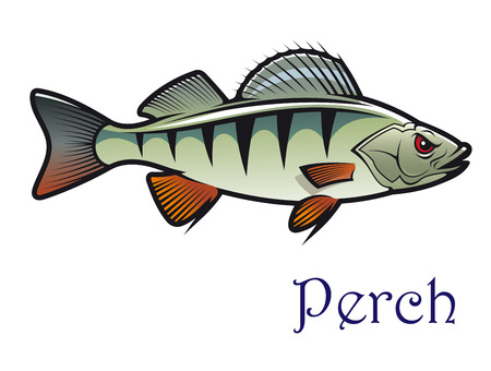 Cartoon freshwater edible perch in side view with the text - Perch - below, for fishing sports design Vector