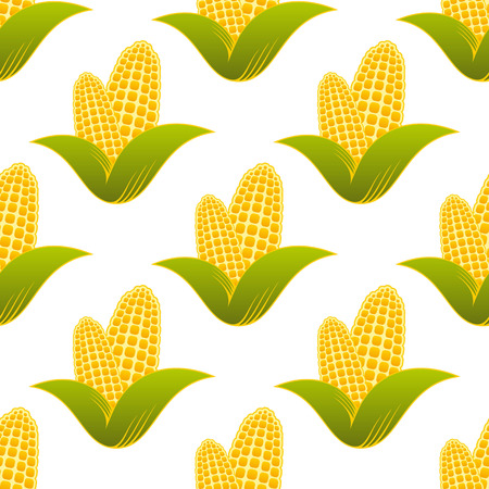 corn crop: Seamless pattern of farm fresh yellow corns for healthy diet suitable for food industry isolated over white background in square format