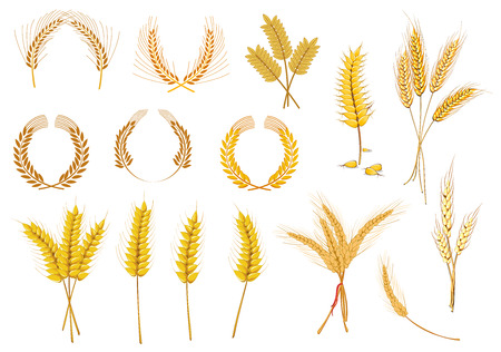 Creral ears and grains set for agriculture industry design Illustration