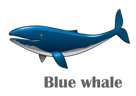 cetacean: Cartoon smiling blue whale isolated on white background for nautical, wildlife and ecology design