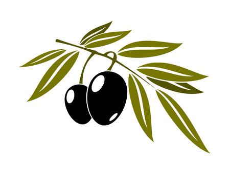 Olives noires branche avec des feuilles isolé sur fond blanc pour la cuisine, la gastronomie, l'huile et la conception végétarien Banque d'images - 31017038