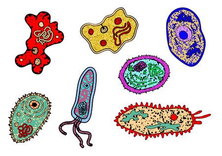 celula animal: Cartoon amebas o formas de vida microbianas fijadas para la ciencia, la biología, la medicina o el diseño educación