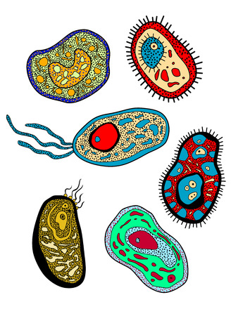protozoan: Cartoon various amebas, amoebas, microbes, germs or microbial lifeforms for science, biology, medicine or education design