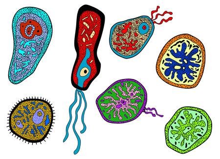 celula animal: Colorida de dibujos animados de colores, amebas amebas, microbios, gérmenes o microbios bacillus formas de vida para la ciencia, la medicina y la biología de diseño
