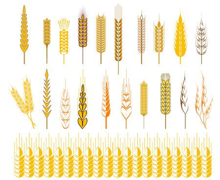 oat field: Set of icons of ripe golden ears of wheat and cereals conceptual of farming, agriculture and staple foodstuffs, vector design elements