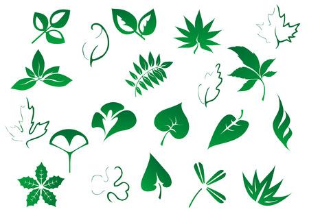 Arbre vert et plantes feuilles set isolé sur fond blanc pour l'environnement, l'écologie et le design de la botanique Banque d'images - 31975644