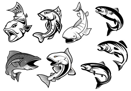 Cartoon salmons fish set for fishing sports or seafood design Vectores
