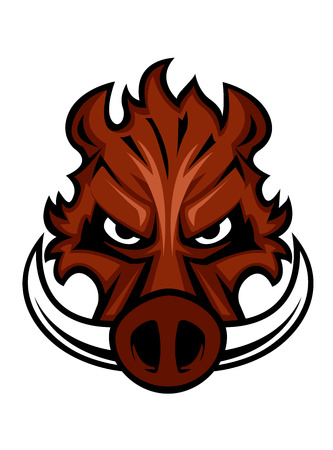 Fierce angry wild boar head with glaring eyes and curving tusks Vector