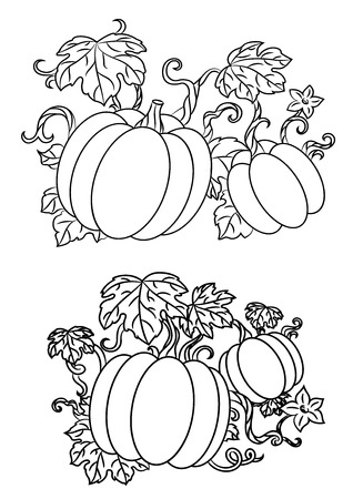 line drawings: Black and white line drawings of pumpkins growing on trailing vines with leaves for halloween design, vector illustration isolated on white Illustration