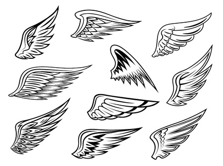 Set of heraldic vector wings in black and white with feather detail for tatto or logo design, isolated on white