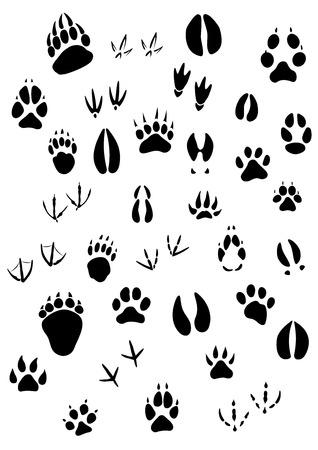 Grote reeks van dierlijke voetafdrukken zijn onder zoogdieren en vogels
