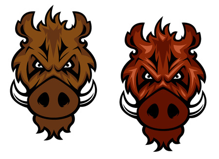 hardy: Fierce wild boar character with curved tusks glaring at the viewer, vector illustration isolated on white