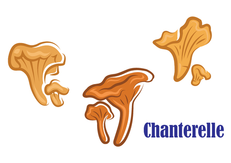 isoated: Chanterelle mushroom icons showing three different views of a large and small chanterelle side by side, isoated on white background Illustration