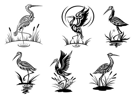 cigueña: Cigüeña, garza, grúa y aves garza ilustraciones de vectores en vista lateral en blanco y negro que muestran las aves zancudas en el agua Vectores