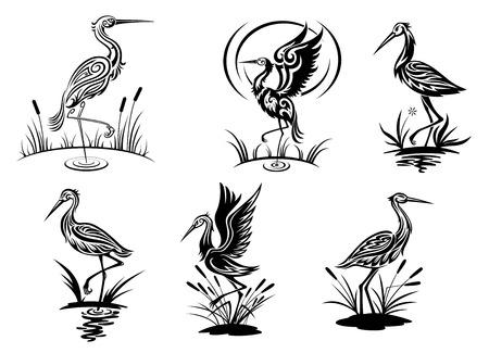 cigogne: Stork, hérons, grues et oiseaux d'aigrettes illustrations vectorielles de vue en noir et blanc côté montrant les échassiers dans l'eau