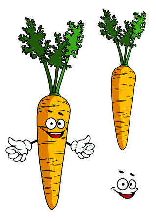 cartoon carrot: Happy cartoon carrot character with a smiling goofy face and waving arms with a second plain carrot, vector illustration on white