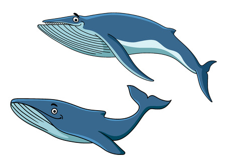 ballena azul: Las ballenas azules de dibujos animados nadando bajo el agua con sus colas, ilustración vectorial en blanco