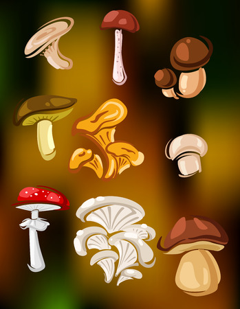 edible: Colorful set of vector mushrooms and fungi showing edible agaricus, cep, boletus, chanterelle and oyster mushrooms and toxic red and white agaric