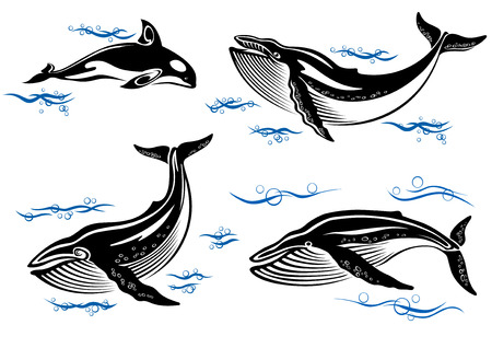 baleen whale: Cartoon vector sea whales with swimming baleen whales and an orca with small ocean waves