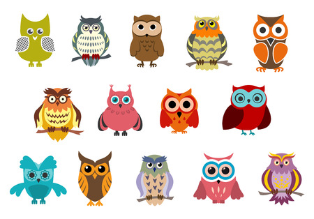 Cartoon cute owl birds characters isolated on white background