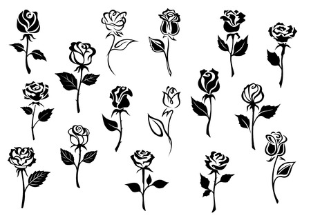 a bud: Black and white elegance roses flowers set for any floral design or love concept Illustration