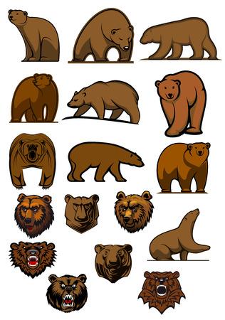 animales del zoologico: Osos pardos de la historieta y grizzly en diferentes poses y cabezas de osos agresivos para el tatuaje, la mascota o el dise�o de la fauna