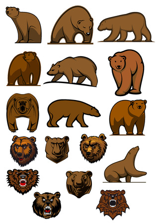 Cartoon brown bears and grizzly in different poses and aggressive bear heads for tattoo, mascot or wildlife design