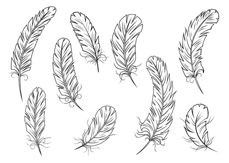 Outline fluffy weightless bird feathers or quills isolated on white background Vector