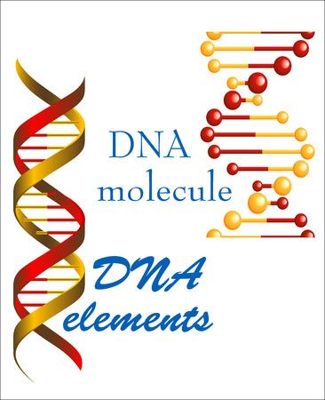 의학, 유전학과 생물학 개념 또는 디자인 DNA 분자 및 요소 심볼 일러스트