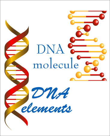 DNA molecule and elements symbols for medicine, genetics and biology concept or design