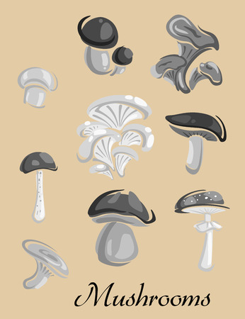 cep: Mushrooms placard depicting champignon, cep, boletus, chanterelle, oyster, agaric forest mushrooms on beige background suitable for public warnings and healthcare concept design Illustration