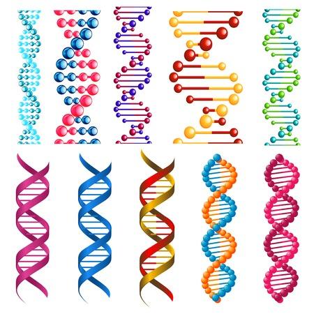 Las moléculas de ADN de colores que muestran la estructura helicoidal o patrones decorativos espirales retorcidas en patrones sin fisuras verticales para bordes y marcos