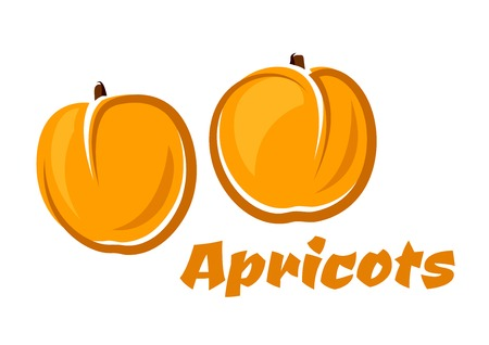 aroma: Apricot fruits poster depicting aroma juicy soft fruits in orange and yellow colors with caption Apricots Illustration