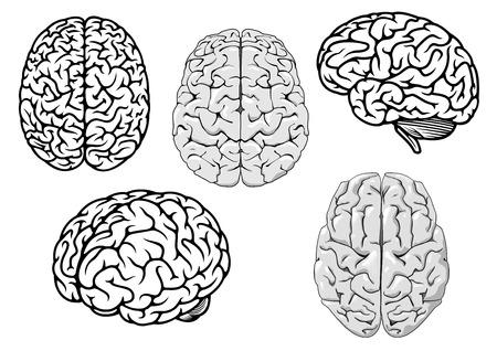 El cerebro humano en blanco y negro que muestran diferentes orientaciones para un concepto de diseño y la ciencia médica