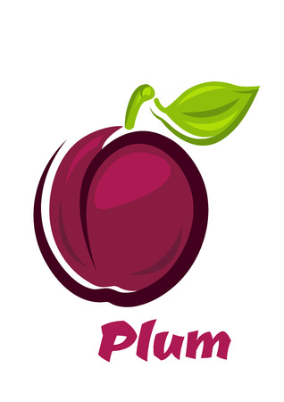 Frische saftige rote violette Pflaume Obst mit hellen grünen Blatt isoliert auf weißem Hintergrund für Rezept-Buch-Design geeignet