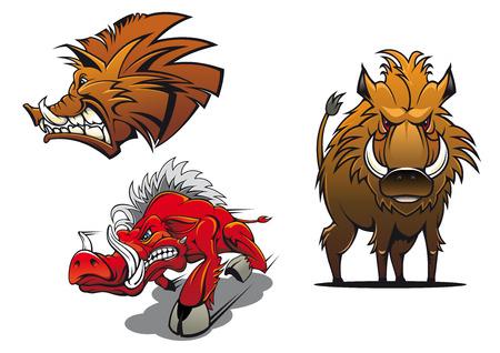 jabali: Forest jabalíes mascotas de dibujos animados que muestran cerdos enojados rojo y marrón con pelo rizado y sonrisa agresiva para el tatuaje o el deporte símbolo equipo de diseño