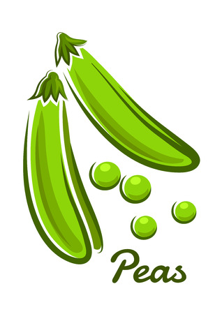 Fresh green peas vegetable with open pods and round beans in cartoon style with text Peas for vegetarian concept design Vector