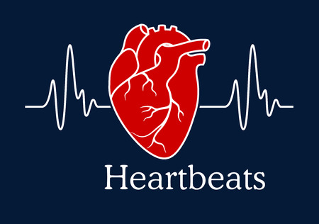 human anatomy: Health care concept depicting human heart with white wavy line of heartbeats cardiogram on dark blue background with caption Heartbeats