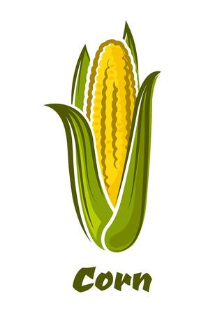 maiz: Maduro maíz amarillo fresco en el vegetal mazorca con las hojas verdes largas en estilo de dibujos animados aislado en el fondo blanco con maíz subtítulo