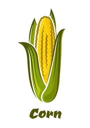 cob: Ripe fresh yellow corn on the cob vegetable with long green leaves in cartoon style isolated on white background with caption Corn Illustration